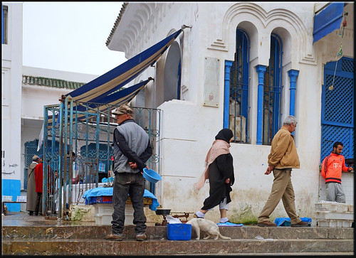 the cat and the fishmarket