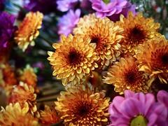 FLOWERS FOR SALE (len.austin) Tags: australia closeup flowers plants 7dwf olympusflickraward
