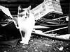 3670 - Macchia (Diego Rosato) Tags: macchia gatto cat pet animal animale rawtherapee bianconero blackwhite fuji x30