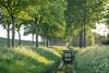 Genderen (peter_1891) Tags: canon 600d sigma 1750mm photo nature trees water grass sunset genderen altena brabant nederland bomen groen green