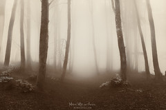 Paths of solitude (Mimadeo) Tags: fog forest path mood moody atmosphere atmospheric monochrome brown landscape magic dreamy tree trees bright light nature mystery mist spooky foggy misty woods creepy fantasy mysterious surreal silhouette silhouettes enchanted lost retro vintage toned filter effect cold solitude season seasonal winter autumn sunlight