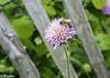 Bee (davidhediger) Tags: natur nikon nature nikond5300 nikor switzerland schweiz swiss suisse schön beautiful zurich zürich zurigo züri
