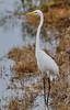 05-17-18-0018231 (Lake Worth) Tags: animal animals bird birds birdwatcher everglades southflorida feathers florida nature outdoor outdoors waterbirds wetlands wildlife wings