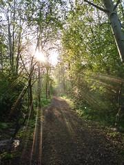 Light through trees (Sundornvic) Tags: light beams rays bright radiance morning trees woods nature shropshire