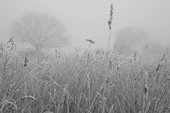 Winter (Ged Slaughter Photography) Tags: winter wintery grass frost frosted trees treescape landscape mist misty fog foggy gedslaughter bw blackandwhite nature