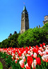 Stretchy Tulips and Peace Tower (Dan Haug) Tags: tulipfestival ottawa parliamenthill capital gothicrevival architecture fujifilm xpro2 xf16mmf14rwr xf16mm