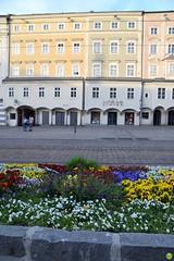 Find Ducky ;) (petrOlly) Tags: europe europa österreich austria ducky linz crochet amigurumi planetjune handmade sk2018 flower flowers nature natura przyroda architecture architektura building buildings
