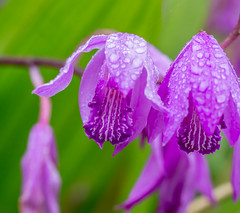 Ripple Macro. (Omygodtom) Tags: lily flor flora pink green macro bokeh tamron90mm texture usgs ripple flower water