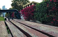 Bench view (Irina.yaNeya) Tags: sharjah uae emirates city urban bench park street flowers trees iphone sunset wood eau ciudad banco parque calle flores árboles madera الامارات الشارقة مدينة مقعد حديقة شارع زهور أشجار غروب خشب оаэ эмираты шарджа город лавка парк улица цветы кусты закат дерево