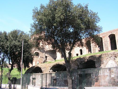 Пагорб Палатин, Рим, Італія InterNetri Italy 03