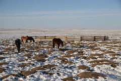 48062-002: Strategic Planning for Peatlands in Mongolia (Asian Development Bank) Tags: 48062 48062002 climatechange mng mongolia peatlands animals cold donkeys environmentconservation farmanimals livestock outdoor peatlandmanagement peatlandrestoration peats province rural snow winter