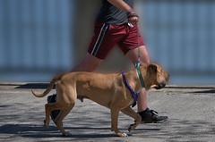 Run With Dog (Scott 97006) Tags: exercise run jog man dog canine animal pet