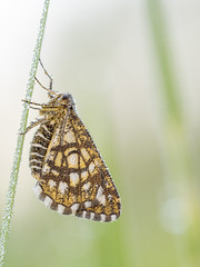 P4280001 (turbok) Tags: insekten schmetterlinge tiere c kurt krimberger