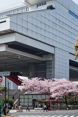 Exterior view of Edo-Tokyo Museum (江戸東京博物館) (christinayan01 (busy)) Tags: sakura cherry blossom japan tokyo blooming nature street roads architecture