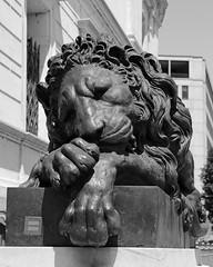 Let sleeping lions lie (Treflyn) Tags: canova lion corcoran gallery art washington dc usa