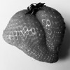 Strawberry (Andy Sut) Tags: kiss deformed closeup food macro monochrome bw blackandwhite fruit strawberry