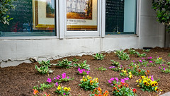 2018.05.06 Vermont Avenue, NW Garden - Work Party, Washington, DC USA 01862
