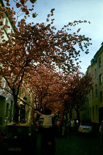cherry street in bonn