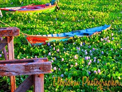 VALENTINA & ROSALIA (elbetobm thanks +8.800.000 views) Tags: flickr elbetobmphotographer rionegro southamerica uruguay colors green red river boats flowers wood old dock puertovillasoriano art shot canonpowershotsx130is picture super atmospheric beautiful capture photo colorful multicolor composition love lighting unique lovely