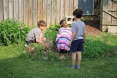Kids Setting Up Fairy Garden (Jaimee and Brian) Tags: avalon elevenyears austin eightyears avery sixyears illinois