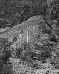 Tre linjer (Marius Krane) Tags: strømlinjer 135mmlens ilfotecddx hp5plus theitaliancamera gibbellini ilford analog gimsøya