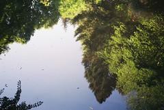 Reflection, Paradise Bottom pond (knautia) Tags: paradisebottom leighwoods bristol england uk may 2018 film ishootfilm olympus xa2 fuji superia 400iso olympusxa2 nxa2roll15 forestrycommission woods arboretum pond reflection
