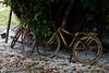 Simples (joaquimpaneto) Tags: bike simple simples nikon 1855mm bicicleta color colorida aldeia praia mar brasil brazil beach beachphotography photojournalism fotojornalismo pic beachphoto