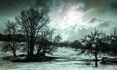 Combloux lomography turquoise 02 2018025 (Patrick.Raymond (4M views)) Tags: alpes haute savoie megeve comloux montagne neige froid gel bois arbre foret argentique nikon lomography turquoise