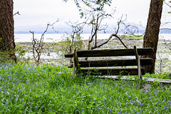 Lonely Bench (Roshine Photography) Tags: hornbyislandlodgeretreat heronrockbeach vista periwinkle ocean hornbyislandretreat vancouverisland diverslodge greengrass hornbyisland countries canada bench cvps places britishcolumbia ca