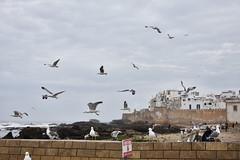 _VZS2397 (pixievargz) Tags: morocco travel travelphotography