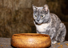 Barn Cat (Marty Bisson) Tags: cat kitty barn pet pets animals