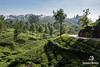 Lipton's Seat (www.jamesbrew.com) (James Brew (www.jamesbrew.com)) Tags: srilanka landscape landscapephotography travel travelling travelphotography asia nature mountains tea teaplantation liptonsseat hiking trekking walking
