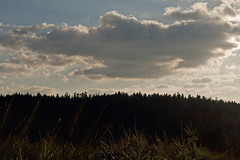 30YRS (Steph Blin) Tags: arbres trees forest forêt bois woods boisnoirs forez auvergne massifcentral colline hills mountains nuage cloud ciel nature sky clouds firs sapins sunset coucherdesoleil twilight paysage landscape 63 france