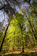 Portglenone Forest. Northern NIreland. (jtatodd) Tags: 06neutraldensitysoftgrad 2018 adventure amateur canopy countyantrim digital flowersplants forest fullframe grass green ilce7 ireland lee leefilters leelandscapepolariser landscape light may mirrorlesscamera nature neutraldensity northernireland photography portglenone sel1635z sony sony1635mmf4variotessartfezaoss sonya7 spring trees wideangle wild wilderness wood zeiss unitedkingdom gb