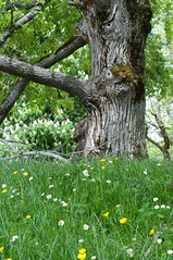 Foreste Casentinesi - primavera 2018 (PatrickWild) Tags: casentino foreste casentinesi wood forest romagna emiliaromagna nature italy trekking