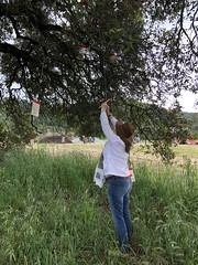 Hanging a wish (sarahstierch) Tags: beldenbarns santarosa wineries winery winetasting farms california sonomacounty winecountry wishing