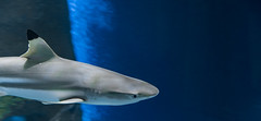 Wien 2017 - Haus des Meeres (karlheinz klingbeil) Tags: hai shark water wasser tier animal austria aquarium city zoo vienna österreich stadt wien at