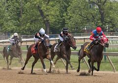 2018 Pimlico Race track (16) (maskirovka77) Tags: pimlico dirt mare race racehorse threeyearold turf yearling