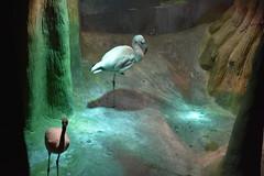 Flamingos (Adventurer Dustin Holmes) Tags: 2018 wondersofwildlife flamingo aves animalia chordata pinkflamingos flamingoes phoenicopteriformes wadingbirds phoenicopteridae