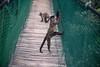 Not Pleased (zenseas) Tags: africa cebusapella westerncape httpwwwmonkeylandcozaindexphp thecrags monkeylandprimatesanctuary primatesanctuary monkeyland vacation plettenbergbay holiday tuftedcapuchin angry angrymonkey funny