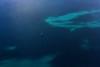 L'atoll de Mayotte en ULM (Ma Poupoule) Tags: ulm mayotte océanindien ocean indianocéan boat bateau mer sea bleu blue paysage landscape