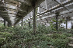 'Overgrown' (Timster1973 - thanks for the 15 million views!) Tags: italy italian italianurbex urbex ue tim knifton timster1973 timknifton derelict decay urban urbanexploration exploration explore eurotour canon europe color colour europeanurbex urbandecay abandoned abandon abandonment forgot forgotten forgottenplaces neglect neglected decaying decayed dereliction urbanwandering exploring old still silent left leftbehind abandonedplaces abandonedspaces explorers factory internal interior overgrown foliage industry industrial pillars structure architecture building