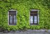 FRIULI SCONOSCIUTO.... (FRANCO600D) Tags: fvg friuli friuliveneziagiulia coseano ud muro finestre edera rampicante mulinodelconte agriturismo canon eos5d franco600d