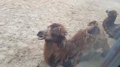 20180523_143733 (TheSlayerNL) Tags: wildlands emmen zoo dieren animals adventure wildlandsadventurezoo