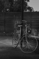 The bike (Arnaud Gilles) Tags: bike vélo nikon d7000 50mm f18 black white noir et blanc