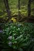 Saja (Pablo RG) Tags: saja cantbaria cantabria primavera flores nikon hayedo paisaje nature naturaleza