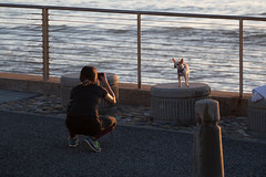 The Pose (SPP - Photography) Tags: california ocean pacificocean pacifica 6d eos6d costline canon coast canon6d pacificcoast candid dog