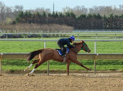 Morning Work (susanmbarlow) Tags: morning gallop photograph equinephotography equine delaware delawarepark horse thoroughbred