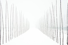 marzo sul canale. (LucaBertolotti) Tags: minimal minimalism lessismore nothing snow white trees fog crema italia italy canalevacchelli lombardia world landscape nebbia neve