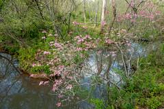 Suwanee in Spring (Jon Ariel) Tags: suwanee gwinnettcounty gwinnett northgeorgia georgia ga water flowers